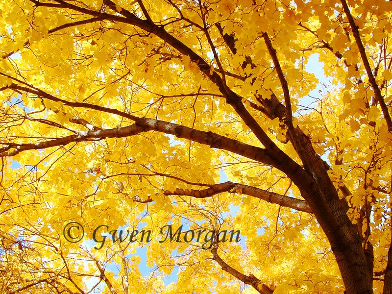Fall Foliage In Bozeman, MT